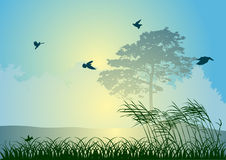 Birds and tree at sunrise illustration Royalty Free Stock Photography