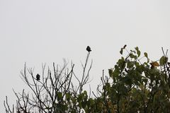 Birds on tree top Royalty Free Stock Photo