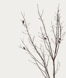 Birds on a tree. Vector image of the birds on a tree in the spring day Stock Illustration