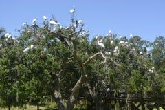 Birds on a tree Stock Photos