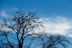 Birds in a tree in winter against blue sky Stock Image