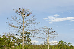 Birds in trees Royalty Free Stock Image