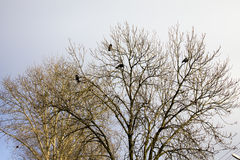 Birds and trees Stock Images