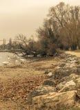 Birds and trees near the lake, sephia effect Stock Photography