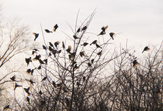 Birds and trees Royalty Free Stock Image
