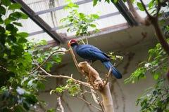Birds tropics. Ueno zoo Tokyo Japan stock image