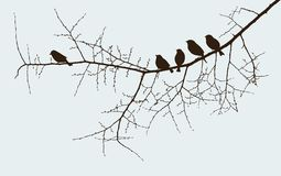 Birds on a twig Royalty Free Stock Photos