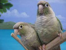Birds. Two parrot birds sitting on a stick Stock Image