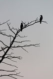 Birds. Two birds on the tree branch stock photography