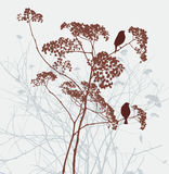 Birds on the umbellate plant Royalty Free Stock Photography