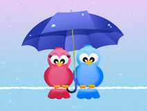 Birds with umbrella Royalty Free Stock Photo