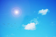 Birds under a bright sun Royalty Free Stock Images