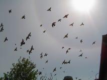 Birds under the sun. Birds fly away from the city under the hot sun stock photos