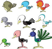 Birds vector Royalty Free Stock Image