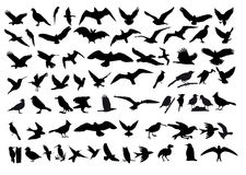 Birds vector. As a variety of vector silhouettes of birds Royalty Free Stock Photo