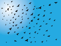 Birds. Vector illustration of birds flock flying Stock Photography