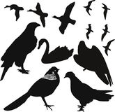 Birds vector Stock Image