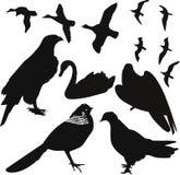 Birds vector. Predator wild nature breeding Stock Image