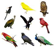 The Birds Stock Images