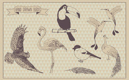 Birds vector set. Hand drawn bird. Vintage design Royalty Free Stock Photography