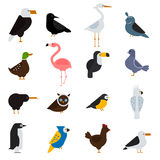 Birds vector set illustration. Eagle, parrot. Pigeon and toucan. Penguins, flamingos. Crows, peacocks. Black grouse Royalty Free Stock Photo