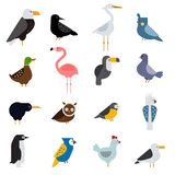 Birds vector set illustration. Egle, parrot, pigeon and toucan. Penguins, flamingos, crows, peacocks. Black grouse Royalty Free Stock Photography
