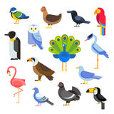 Birds vector set illustration. Egle, parrot, pigeon and toucan. Penguins, flamingos, crows, peacocks. Black grouse Stock Photography