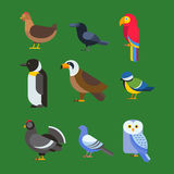 Birds vector set illustration isolated Royalty Free Stock Image
