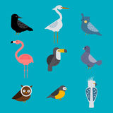 Birds vector set illustration isolated Stock Photography