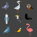 Birds vector set illustration isolated Royalty Free Stock Images