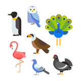 Birds vector set illustration isolated Stock Photos