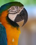Birds View. Beautiful Macaw Royalty Free Stock Photos