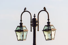 Birds on vintage lamp post Stock Images