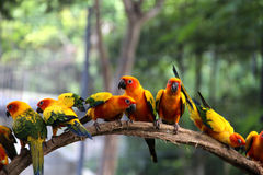 Birds. Vivid birds on timber with soft focus nature background stock image