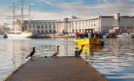 Birds waiting for ferry boat. Birds (cormorants)  waiting for ferry boat in Bristol, uk harbor Stock Photos