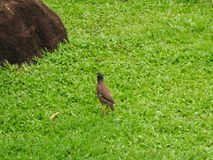 Birds walking on the green lawn under a tree stock images