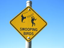 Swooping birds warning sign royalty free stock photography