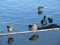 Birds by the water. Stock Photography