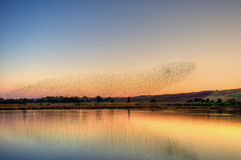 Birds on the water at the sunset. Birds at the lake in a fall's sunset Stock Image