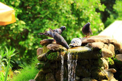 Birds at a waterhole in the heat at the Creek Stock Image
