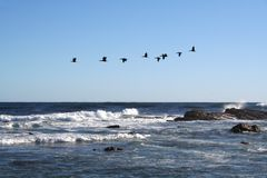 Birds & Waves Royalty Free Stock Images
