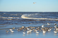 Birds and waves Stock Image