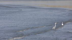Birds on waves stock video footage