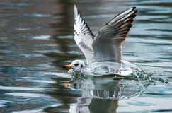 Birds weeds wings a feather take-off to fly water a beak scope. Birds weeds wings a feather take-off to fly water Stock Photo