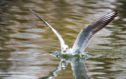 Birds weeds wings a feather take-off to fly water a beak scope Stock Photo