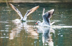 Birds weeds wings a feather take-off to fly water a beak scope. Birds weeds wings a feather take-off to fly water Stock Image