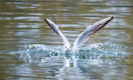 Birds weeds wings a feather take-off to fly water a beak scope. A pleasure to watch flying birds . I want to fly Royalty Free Stock Image