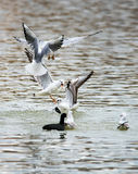 Birds weeds wings a feather take-off to fly water a beak scope Royalty Free Stock Photos