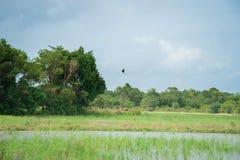 Birds were flying Stock Image