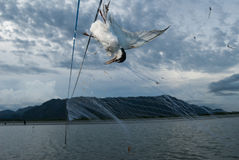 Birds were killed by fish net Stock Images